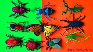 getlinkyoutube.com-Insect Collection Beetles Fly Grasshopper Scarab Rhino Praying Mantis Stink Bug Butterfly FUN ending