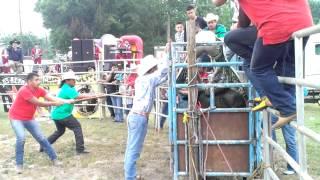 getlinkyoutube.com-Primera monta de Mono diaz de Colima en usa