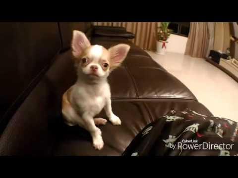 Chen Yi Ru家的娃娃:大吉