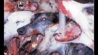 les animaux maltraité a regardé sensible s'abstenir choc