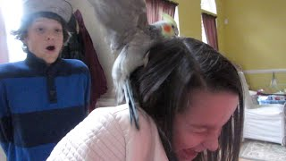 getlinkyoutube.com-Attacked by a Bird on Thanksgiving! (WK 204.3) | Bratayley