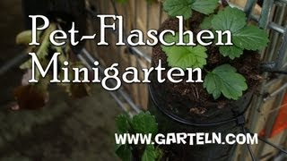 getlinkyoutube.com-Minigarten in der Pet Flasche