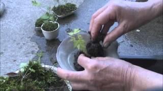 getlinkyoutube.com-苔でちいさな鉢植を