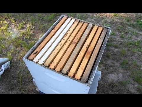 Beekeeping lessons: a beehive check up and maintenance with Allen the Beekeeper