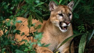 Big Cats and Wild Animals in Florida