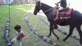 getlinkyoutube.com-El Caballo Negro de mis niños
