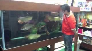 ปลามังกร9มงคล
