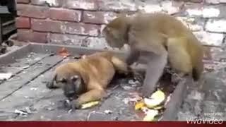 Monkey and dog Punjabi dubbed width=