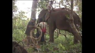 getlinkyoutube.com-สารคดีส่องโลก  ตอน โพนช้าง 1