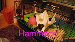 getlinkyoutube.com-DIY Hammock for hamsters!