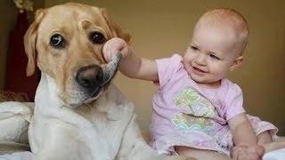 getlinkyoutube.com-Videos de risa de bebes - Se ríen de los perros