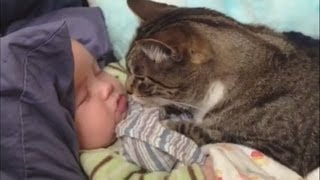 "getlinkyoutube.com-""Cats Love Babies Compilation"" 
