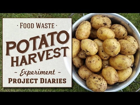 ★ Food Waste: Potato Harvest (Experiment)