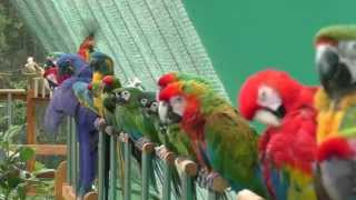 getlinkyoutube.com-Shuka Vana ~ Rehabilitation Centre for Birds