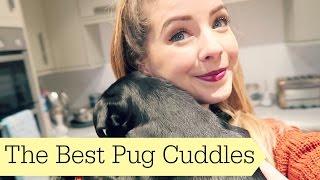 getlinkyoutube.com-The Best Pug Cuddles   ad