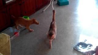 getlinkyoutube.com-Нассал собаке в миску