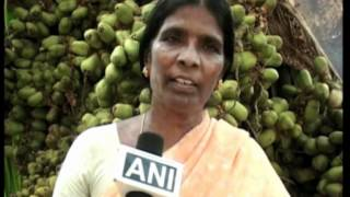 getlinkyoutube.com-Coconut trees bear record breaking 5000 fruits in India's southern state