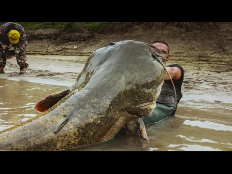 MAMMOTH CATFISH TALL 8,20 FEET VS LITTLE BOAT - HD by CATFISHING WORLD