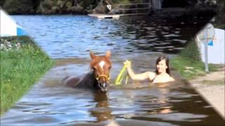 getlinkyoutube.com-Les chevaux dans l'eau  ♥