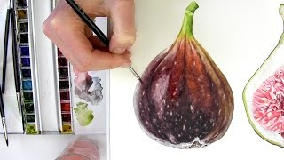 getlinkyoutube.com-How to paint a realistic, velvety fig in watercolour with Anna Mason