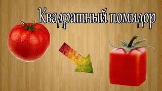 getlinkyoutube.com-Как вырастить квадратный помидор.