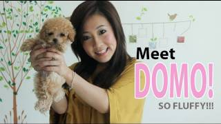 getlinkyoutube.com-New Puppy & January Favs