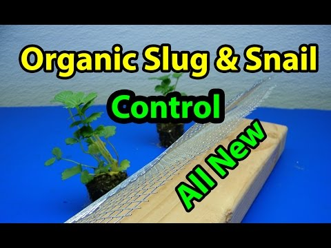 All New EZ DIY Organic Slug and Snail control for vegetable gardening for beginners 101