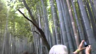 The Bamboo Forest in Saga
