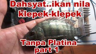getlinkyoutube.com-Cara Membuat Strum Ikan Tanpa Platina - Part 1