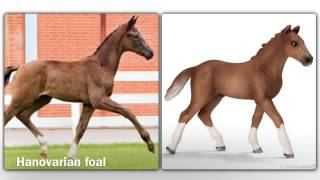getlinkyoutube.com-Schleich horses in real life. Part 3 (foal addition).