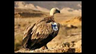 getlinkyoutube.com-النسر الاسرائيلي Eagle Israeli