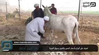 getlinkyoutube.com-مصر العربية | تعرف على أنواع وأسعار الحمير والخيل بسوق الجيزة