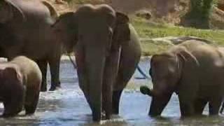 Elephant in the Room - Sri Lanka