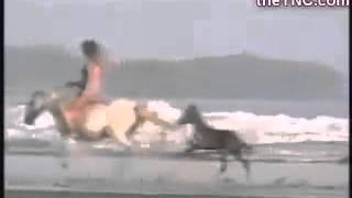getlinkyoutube.com-شاهد حيوانات قليلة الادب/غرائب وعجائب