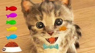 Play Fun Pet Care Kids Game  Little Kitten My Favorite Cat   Fun Cute Kitten For Children & Toddlers
