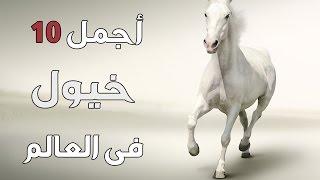 getlinkyoutube.com-أجمل انواع الخيول فى العالم ؟!