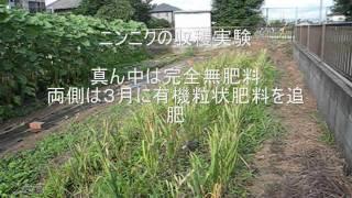 getlinkyoutube.com-自然農法ナウ20110702「ニンニク及びラッキョウの収穫」