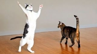 Cats are the kings of animal comedy - Funny cat compilation