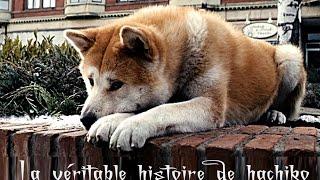 getlinkyoutube.com-hachiko وفاء نادر / الكلب الذي ابكى الكثير