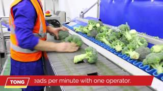 Broccoli Trimming & Cutting with Tong Broccoli Trimming Line