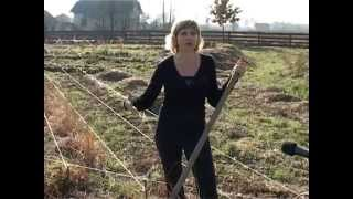 getlinkyoutube.com-Тепла грядка Розума. Вирощуємо ремонтантну малину. Результати восени. Органіка і природа.