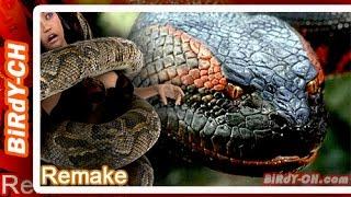 getlinkyoutube.com-งูยักษ์ 10อันดับ สายพันธุ์งูที่มีขนาดใหญ่ที่สุดในโลก | Remake