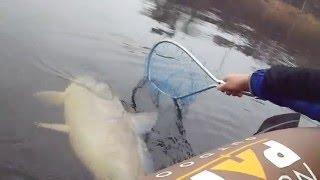 getlinkyoutube.com-Huge Wisconsin River Buffalo Carp In a Tiny Boat LyubakaVideo
