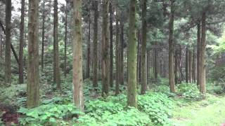 사려니숲 힐링