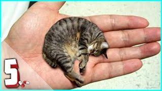 getlinkyoutube.com-TOP 5 ANIMALI PIU' PICCOLI AL MONDO 💊 #01