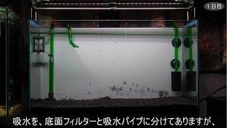 getlinkyoutube.com-えび水槽 ①水槽立ち上げ 試運転