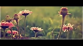 getlinkyoutube.com-تلاوة هادئة  تريح القلب .. صوت هادئ رائع ♥♥