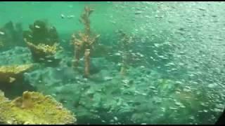 getlinkyoutube.com-Full Ride: Finding Nemo Submarine Voyage with Binaural Audio
