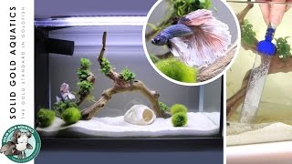 getlinkyoutube.com-How I Do Water Changes for My Betta Fish