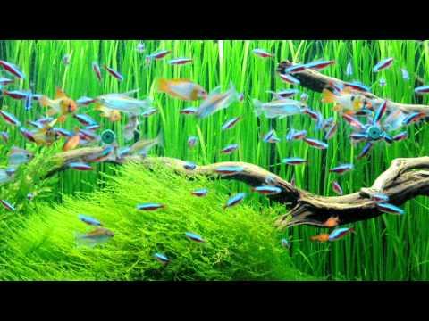 Biljni akvarijum 1680 litara - hranjenje riba